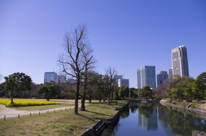 A view from Hamarikyu Gardens