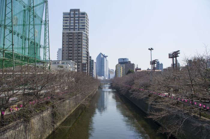 Banks of Meguro river prepared for the hanami festival